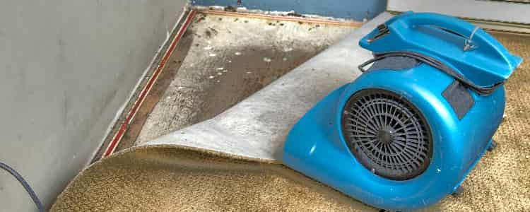 Best Flood Damage Restoration Mordialloc